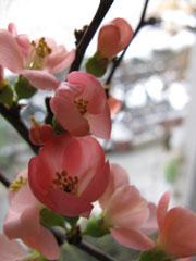 Blumenbild2